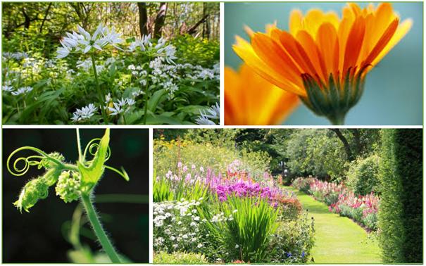 La perception des odeurs par les plantes [FR] [EN]