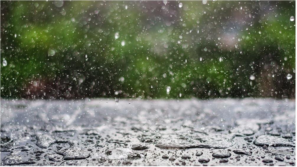 Odeur de la pluie : Une  relation symbiotique [FR][EN]